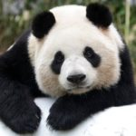 Post Panda Adjustments Niche Websites and Blogs Need to Make to Survive